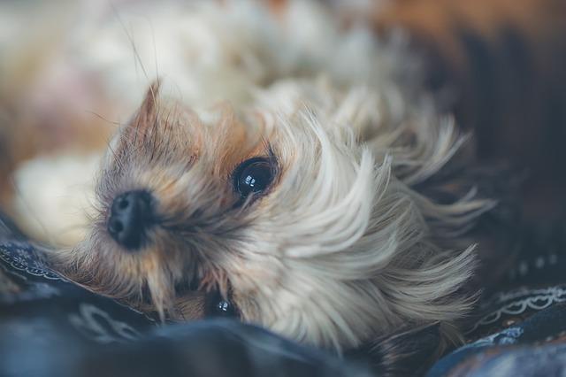 roztomilé štěně