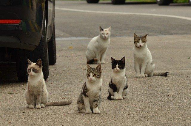 kočky u auta