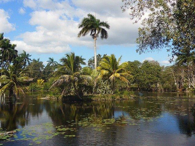 palmy na Kubě