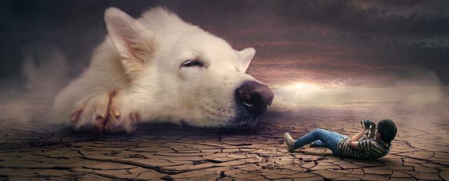fotomontáž se psem